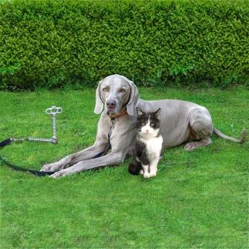 Zemní kotva pro psí vodítko